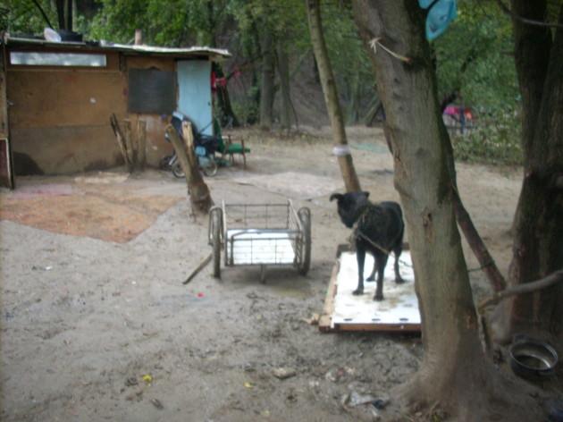 Chudák pes, čo už ten tam tým ľuďom môže ešte ustrážiť?!